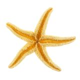 Isolated star fish Stock Image