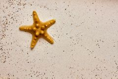 Isolated starfish in the sand. Isolated orange starfish in the sand detail closeup stock photo