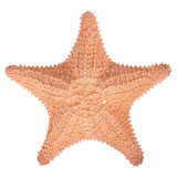 Isolated  Starfish on white background Royalty Free Stock Photos