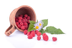 Isolated still life with raspberries Stock Photos