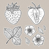 Isolated strawberries. Graphic stylized drawing. Stock Photography