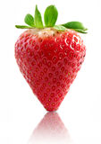 Isolated strawberry royalty free stock photography