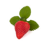 Isolated strawberry with three leave Stock Image