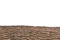 Free Isolated Stump/ Stub Bark With Wooden Texture Stock Photos - 18423803