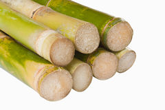 Isolated sugar cane. Bunch of fresh sugar cane in white background Royalty Free Stock Photo
