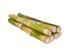 Isolated Sugarcane Stock Photography