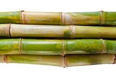 Isolated Sugarcane. Bunch of fresh sugar cane in white background Stock Photos
