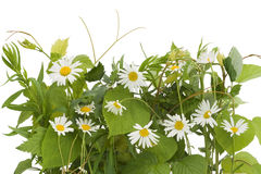 The isolated summer meadow Royalty Free Stock Photo