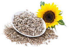 Isolated Sunflower Seeds Royalty Free Stock Image