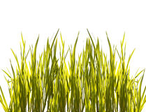 Isolated closeup green grass on white Stock Photos
