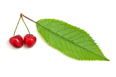 Isolated sweet cherries. Royalty Free Stock Photo