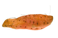 Isolated sweet potato royalty free stock image