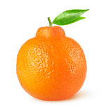 Isolated tangelo citrus fruit Royalty Free Stock Photos