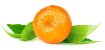 Isolated tangerine Royalty Free Stock Photos
