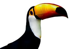 Isolated toucan Royalty Free Stock Photo