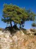 Isolated tree Stock Photography