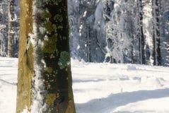 Isolated tree. Into the underwood Royalty Free Stock Photo
