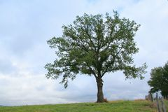 Isolated tree. In a field in Aveyron, France Royalty Free Stock Photos