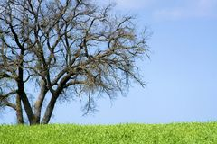 An Isolated tree. In the sicilian hinterland Royalty Free Stock Image