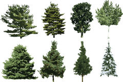 The isolated tree Royalty Free Stock Photos