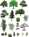 The isolated tree Royalty Free Stock Photo