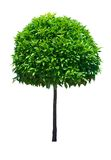 Isolated Tree Royalty Free Stock Photography