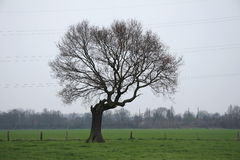 Isolated tree. On grassland Royalty Free Stock Image