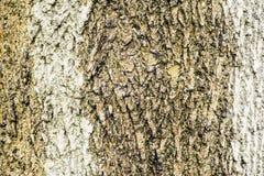 Isolated tree bark Royalty Free Stock Photos