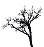 Isolated tree. Isolated black tree on white screen Royalty Free Stock Image