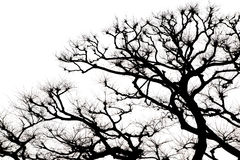 Isolated Tree and Branch in Black and White. Silhouette Tree and Branch on White Background Royalty Free Stock Photo