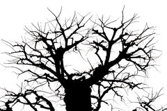 Isolated Tree and Branch in Black and White. Silhouette Tree and Branch on White Background Stock Photos