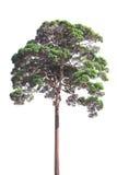 Isolated of tree bush on white background Stock Photo