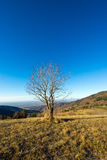 Isolated tree in a cold december morning Stock Photo