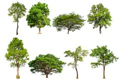 Isolated tree collection stock images