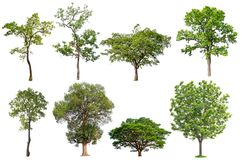 Isolated tree collection stock photo