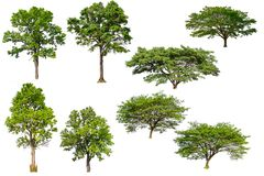 Isolated tree collection royalty free stock photos