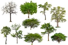 Isolated tree collection stock image