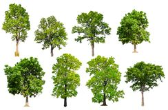 Isolated tree collection royalty free stock photo