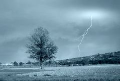 Isolated tree in countryside Stock Images