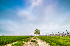 Isolated tree in the countryside Stock Photo