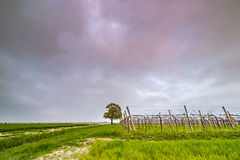 Isolated tree in the countryside Stock Image