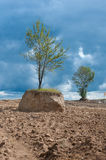 isolated tree in field. Artificially isolated tree in a field, cut the ground around the tree Royalty Free Stock Images