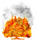 Isolated tree in fire on white, symbol Royalty Free Stock Images