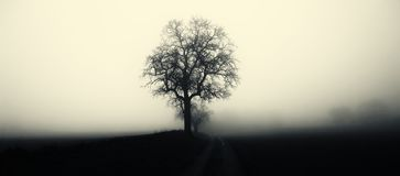 Isolated tree in fog surrounded by mysterious gloomy landscape. Rain,mist,road,negative space for text, minimalistic composition,late autumn,South Moravia stock photo