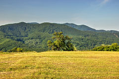 Isolated Tree with Forested Hill in Background Royalty Free Stock Photography