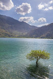 Isolated tree in Fresh water lake between mountains Stock Image