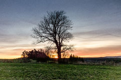 Isolated tree on a grassland. An isolated tree on a grassland along with smaller bushes and shrubs are seen covering the sunset taking place on the horizon Stock Photography