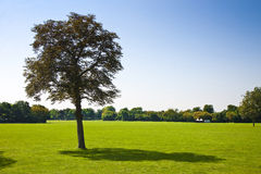 Isolated tree in a green meadow Royalty Free Stock Photography