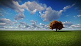 Isolated tree on green meadow, time lapse clouds. Hd video stock footage