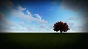 Isolated tree on green meadow, time lapse night to day. Hd video stock video footage